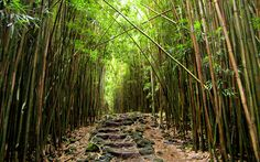 Road to Hana Bamboo Forest + A Self Guided Maui Road to Hana Tour // Local Adventurer Forest Trail, Forest Path, Forest Road, Deep Forest, Bamboo Forest Maui, Road To Hana, Hiking Spots, Maui Hawaii, Hawaii Hikes