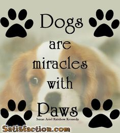 They're miracles in everyone's life. Particularly when you save one from being killed in a shelter. Fill your life, your home and your heart with a miracle - adopt a shelter dog!