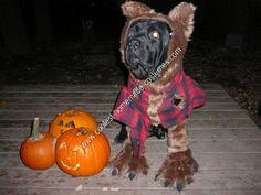 Homemade Werewolf Dog Halloween Costume Idea... This website is the Pinterest of pet halloween costumes