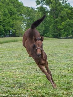 Thoroughbred filly ~ by greenfoley on Flickr
