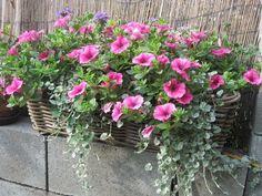 Blumenkasten auf die Fensterbänke - Bilder und Fotos
