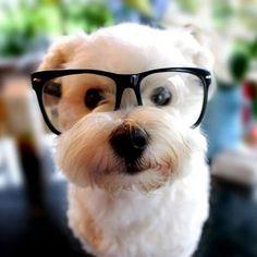 perrito con lentes en la mesa del jardín de una casa