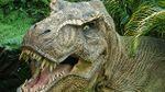 Un estudio señala que los dinosaurios tenían pantalones de plumas para atraer pareja