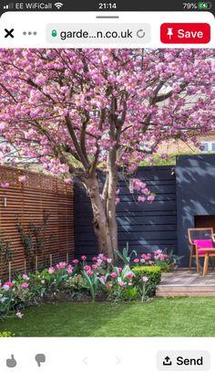 Back Gardens, Container Gardening, Garden Design, Plants, Landscape Designs, Plant, Container Garden, Planets, Yard Design