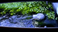 Aquarium waterstroming aan wateroppervlakte Aquarium Filter, Filters, Water, Water Water, Aqua