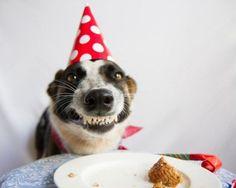 animais-aniversário-5