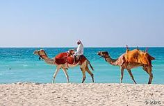 who cares about horses on the beach? i have camels! Dubai Airport, Gods Creation, Camels, Horses, Beach, Animals, Google, Search, Animales