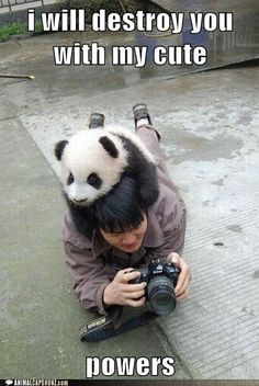 "Adorable Panda- anyone seen the film "" The amazing panda adventure""? It was far greater than the title, haven't seen it since I was young."