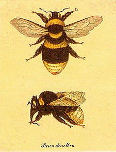 Honey bees who provide us with honey and flowers, fruits and vegetables