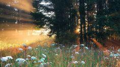Beautiful Forest Wallpaper #6775111