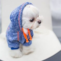 Want to know how to make DIY dog clothes? If your furry pup needs a makeover, th… Want to know how to make DIY dog clothes? If your furry pup needs a makeover, these dog outfit ideas may just be… Continue Reading → Cute Dog Clothes, Cute Dog Outfits, Puppy Outfits, Girl Outfits, Pet Dogs, Pets, Dog Clothes Patterns, Dog Sweaters, Dog Coats