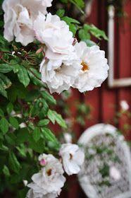 LILJOR OCH TULPANER: Vår sommarträdgård