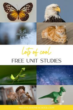 Free unit studies are a great way to spice up your homeschool and take the pressure off lesson planning. Have a look at this cool selection! #mylittlehomeschool #homeschooling #homeschool #homeschoolresources #freeunitstudies #unitstudy Kindergarten Homeschool Curriculum, Homeschooling, March Photo Challenge, Special Needs Mom, Little Houses, Spice Things Up, Unit Studies, Study, The Unit