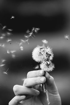 Without silence, there cannot be any real appreciation in life, which is as delicate in its inner fabric as a closed rosebud. • Deepak Chopra