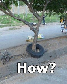 Tyre and Tree