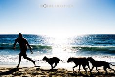 Pit Bulls New York dog beach.  Must check out photographer Michael Brian Photography, bringing awareness to the noble, sweet and gentle Pitbull breed