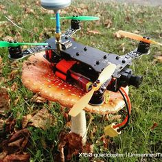 Mushroom makes for a good take off pad not so easy to land on it though. #dronegear #miniquad #fpvdrone #fpvracing #fpvracer #fpv #quadcopter