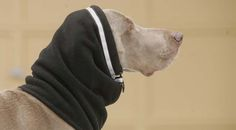 The Head Muff™, 12oz Canadian made fleece is a tapered tube-like ear and head warmer, ideal for breeds with cropped or thin-skinned ears that are susceptible to frost bite.