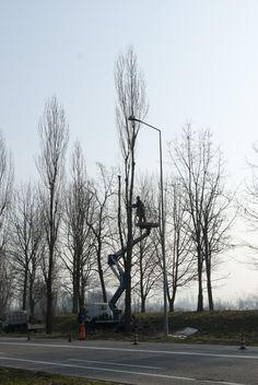 abbattimento di un albero a rischio di caduta - #torino #stupinigi #agridea