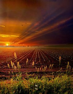 """""""Take It To The Limit"""" Horizons by Phil Koch Milwaukee, Wisconsin"""