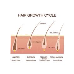 Hair Growth Cycle | Kiierr