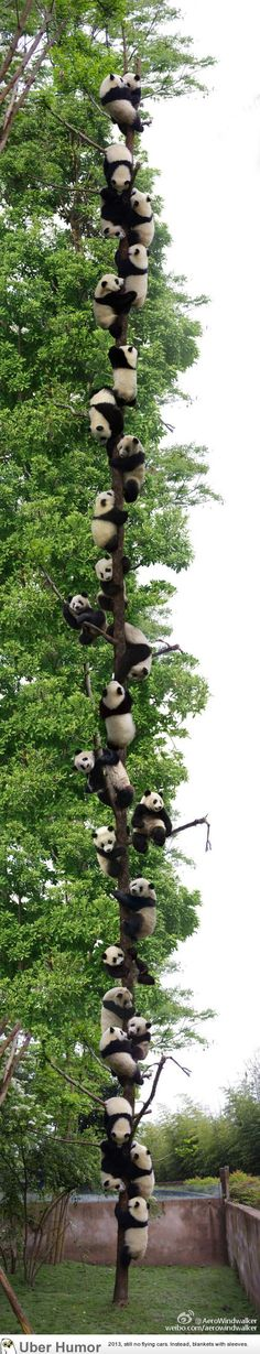 Panda tree! Cute animals, panda bears