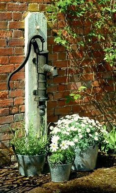 pump and daisies..