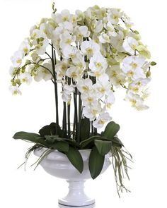 Phalaenopsis Orchid in White Pot - Large – Allissias Attic & Vintage French Style