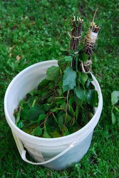 I've been taking saunas for 20 years and finally have made my own Vihta (a bundle of birch branches to soak in warm water and gently slap against the skin to help stimulate blood flow and ope… Sauna Steam Room, Finnish Sauna, Birch Branches, Soaker Tub, Make Your Own, Backyard, Rustic Cabins, Saunas, Plants