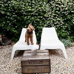 like the mix of modern chairs and classic landscaping and cute, perplexed dog