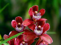 орхидеи на фото-14
