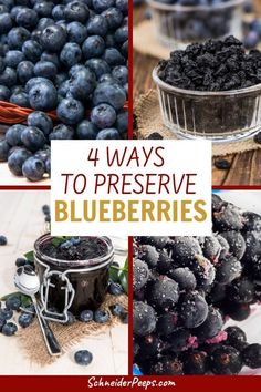 Learn how to preserve blueberries, can, freeze, dehydrate and ferment blueberries to enjoy now and later. Canning Tips, Canning Recipes, Blueberry Recipes Canning, Canned Blueberries, How To Freeze Blueberries, Fruit Recipes, Healthy Recipes, Conservation, Blueberry Season