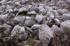 Gefrorene Steine am Rhein in Neuss #frozen #stones #rhine #neuss #shore #winter #frost #ice #nature #hiking #travel #wanderlust #sonyalpha #sonyalpha5000 #sigma19mm