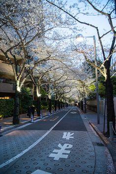 Shanarooo! Aesthetic Japan, Japanese Aesthetic, City Aesthetic, Japanese Lifestyle, Japan Landscape, Japan Street, Anime Scenery Wallpaper, Aesthetic Backgrounds, Japanese Culture