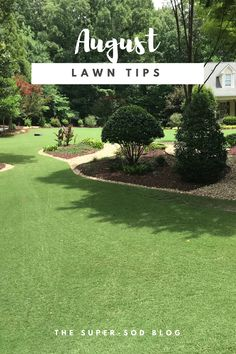 August Lawn Tips For Lawns In The Southeastern United States. Learn About  Best Practices From