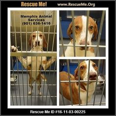 """""""Click here to view Dogs for adoption, or post one in need."""" ― ♥ RESCUE ME! ♥ ۬"""