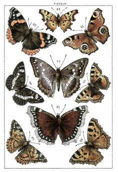 Butterflies - http://hookedondecorating.com-Butterflies-old-Image-Graphics-Fairy2sml.jpg- Rt click on the image- save as!
