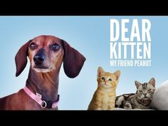 Dear Kitten: My Friend Peanut - YouTube