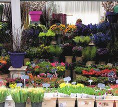 flower shop amsterdam