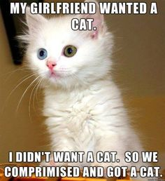 everyone needs a cat.
