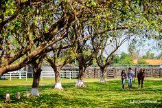 Fotos Pré Casamento no Pantanal – Gessica e Rodrigo