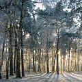 Oude Warande -Tilburg (Nederlands)-Bezienswaardigheden-Natuur & Parken & Begraafplaatsen