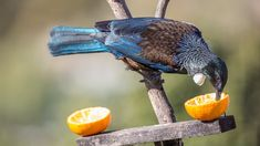 Finish the weekend off with some Tui photos for you. This bird was all sugared up it was like trying to catch a rocket. Nature Photography, Bird, Facebook, Animals, Animales, Animaux, Birds, Nature Pictures, Animal