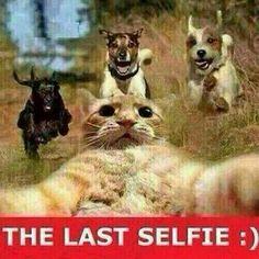 Das letzte selfie (foto)!