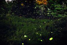 New Art: Pete Mauney's Night Skies + Fireflies - 20x200