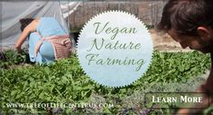 VEGAN NATURE FARMING - using the human diet as a tool to advance consciousness and evolution. Learn More about Vegan Nature Farming.