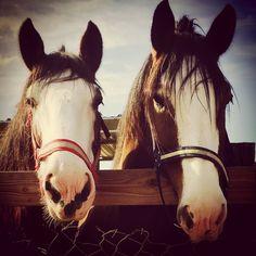 Pony Land Pony Rides San Diego