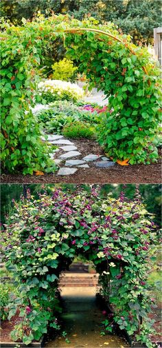20+ favorite easy-to-grow fragrant flowering vines for year-round beauty. Plant them for an arbor, pergola or fence to create gorgeous outdoor rooms! - A Piece Of Rainbow #gardenvinesarbors