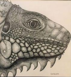 Green Iguana - Framed Drawing