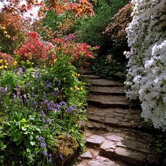 Scotney Castle Gardens, Kent, UK   Shaded steps with bluebells and azaleas (10 of 16)